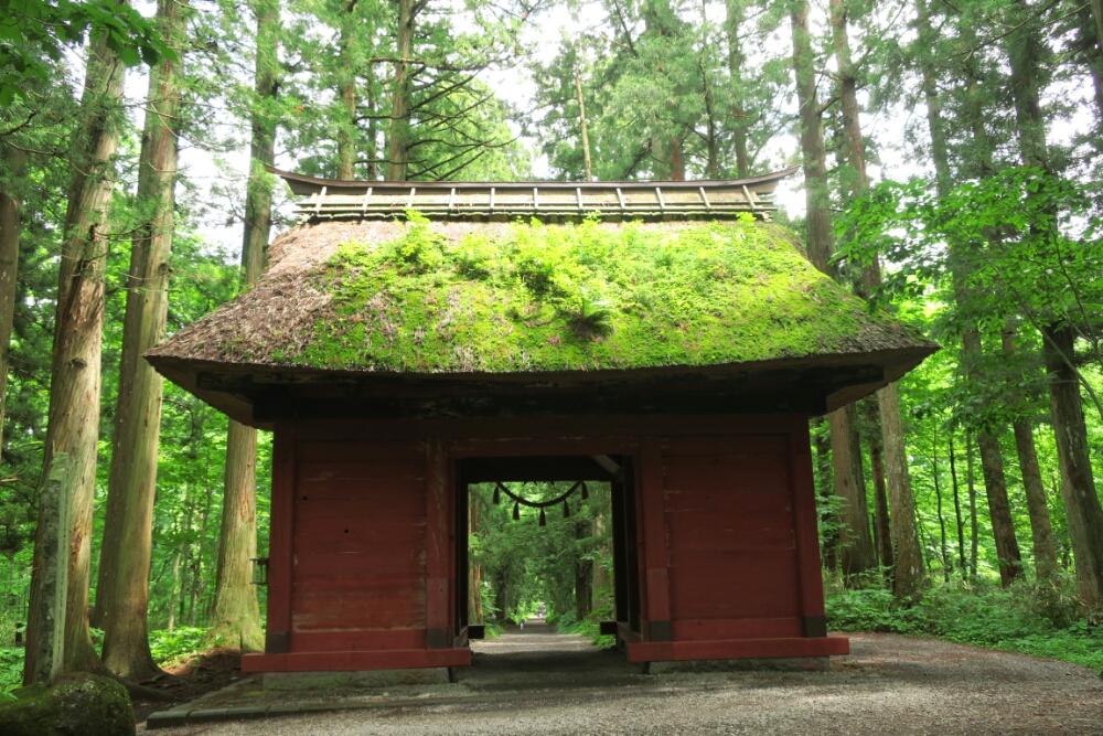 Mountain Forest Shrine
