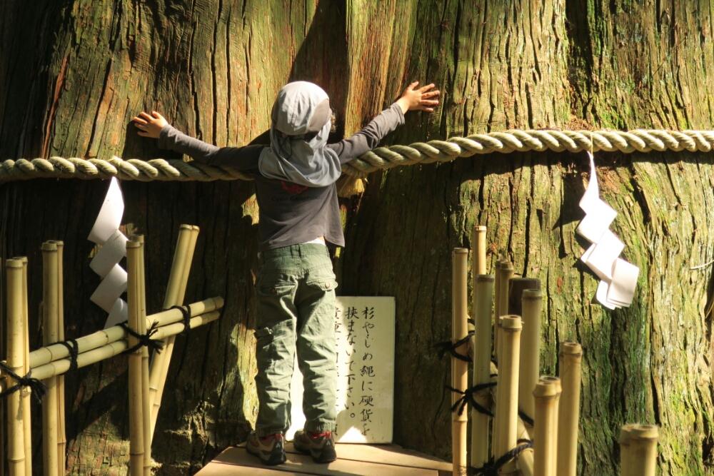 Holy Ancient Japanese Cedar