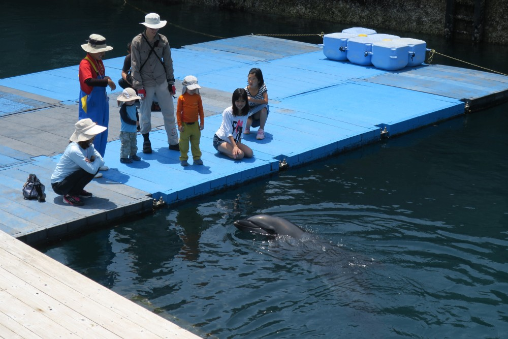 Intimate Encounter with Dolphins