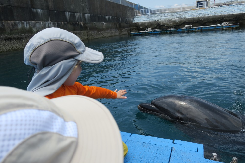 Touch the Dolphin