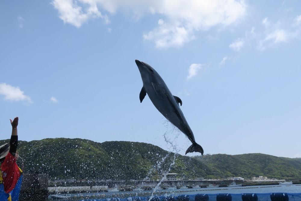 Amazing Jump