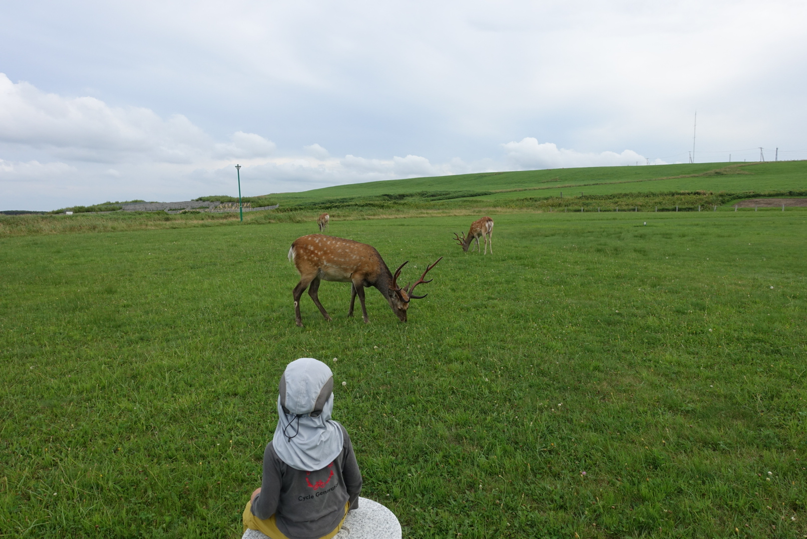 Wild Deers so close