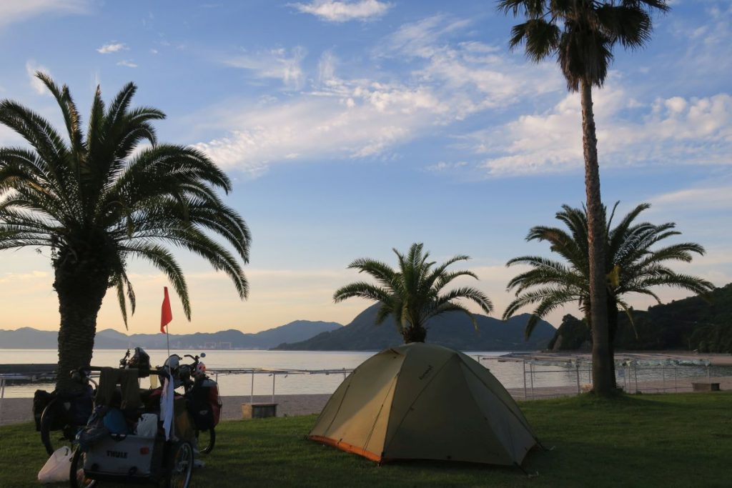 Shikoku Palms