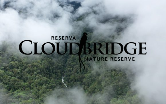 Cloudbridge video