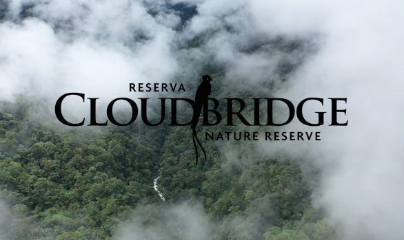 Cloudbridge video